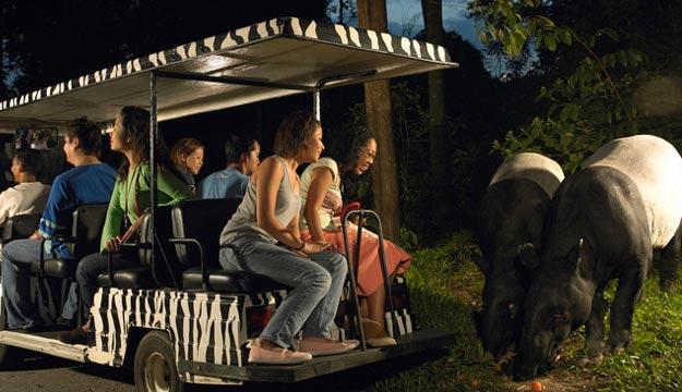 夜间野生动物园位于新加坡动物园.