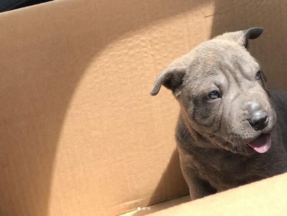 可爱!特伦斯-弗格森晒出自己爱犬的照片