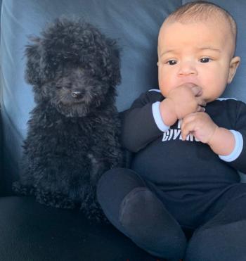 萌娃!沃尔展示儿子与宠物狗合照