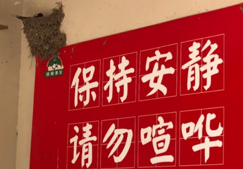 多图流:旧时王谢堂前燕,安家建业基地中