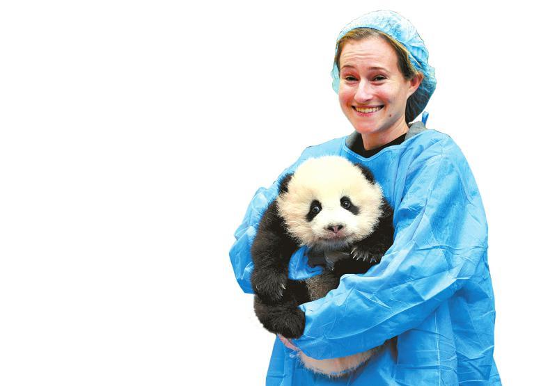 成都奥运熊猫,网友起名奥莉奥