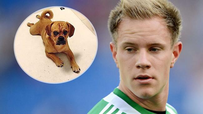善心球迷帮忙,门兴门将特尔施特根寻回爱犬
