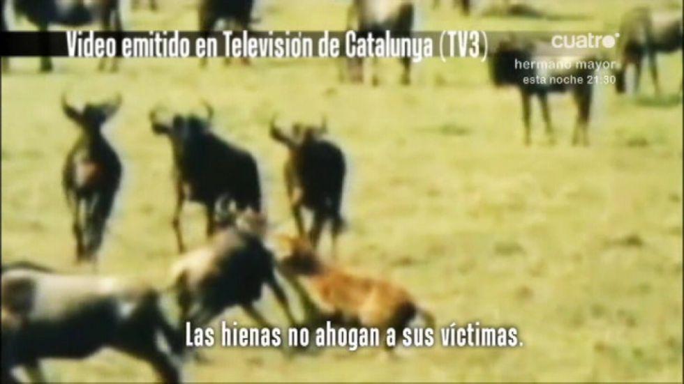 皇马就鬣狗视频向TV3索赔600万欧元