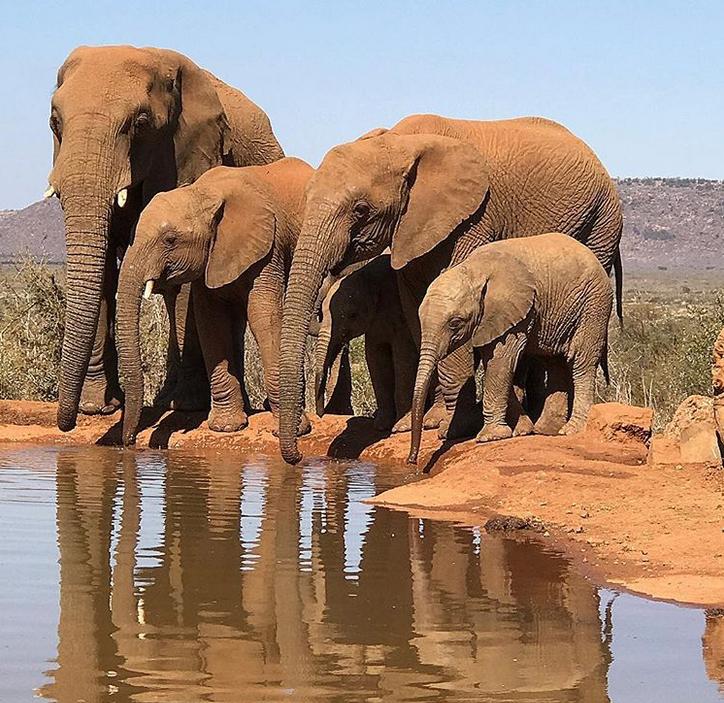 安德烈-德拉蒙德在南非度假時拍攝到大象