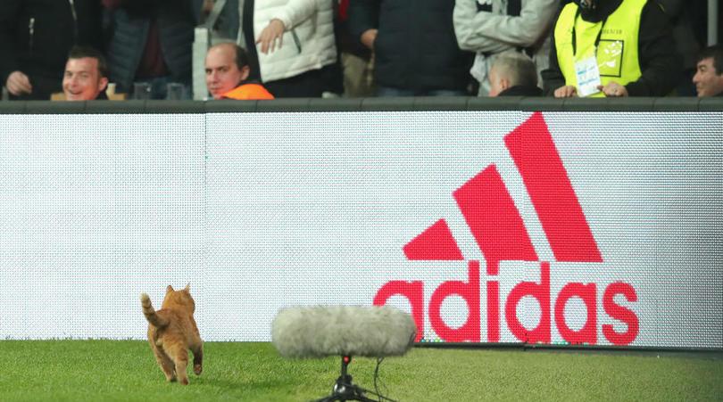卖萌也有罪?因小橘猫入场,贝西克塔斯被罚3.4万欧元