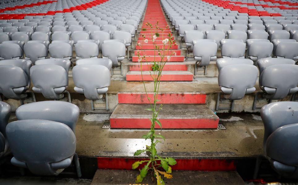 安联球场3个多月无球迷光顾,看台已经长出杂草了