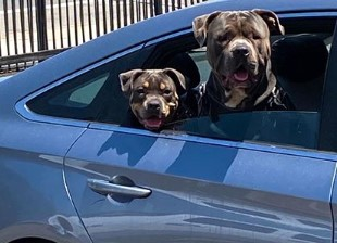 珍妮-巴斯转发友人照片,两只小狗以珍妮和科比名字命名
