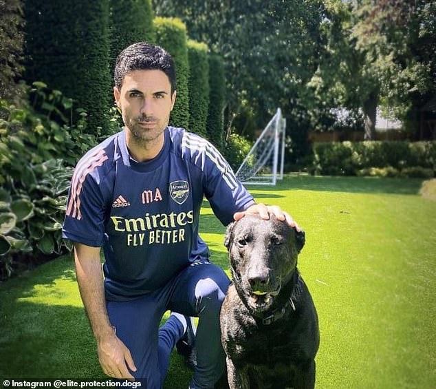 有钱任性!阿尔特塔花2万镑购入护卫犬以防外人入侵