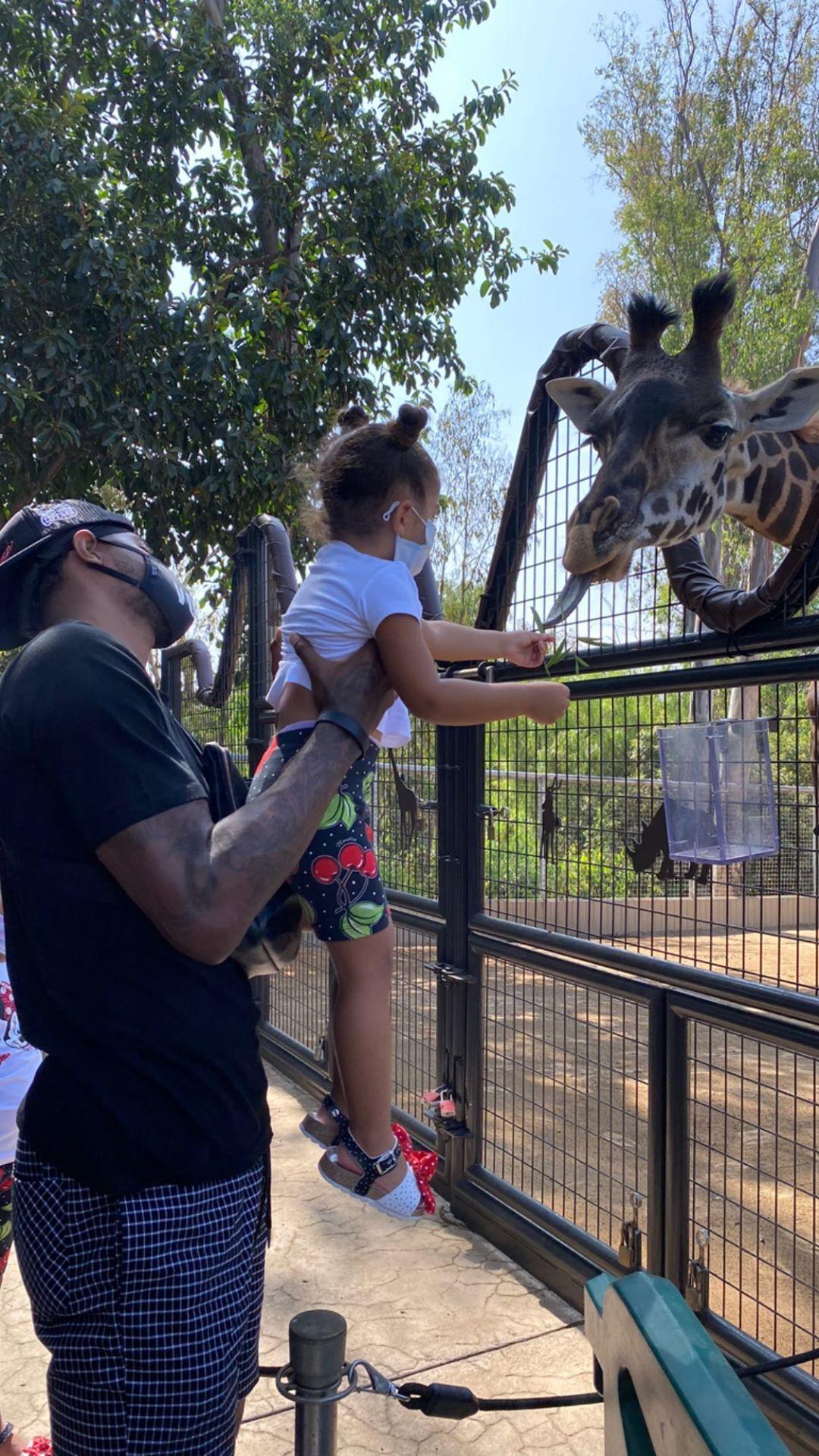 心情舒畅!乔治一家人去动物园游玩
