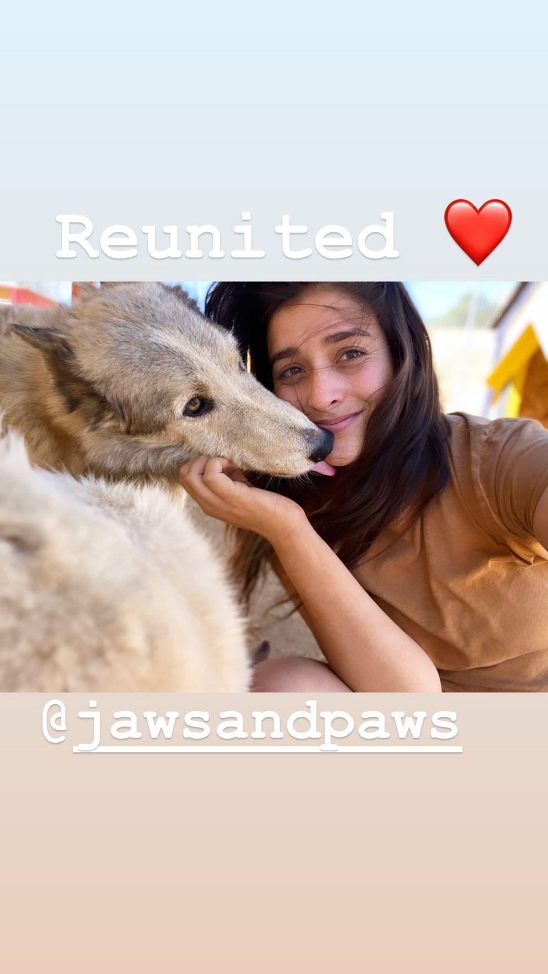 安佳丽更新Instagram,晒出多张自己与救助的狗狗的合影